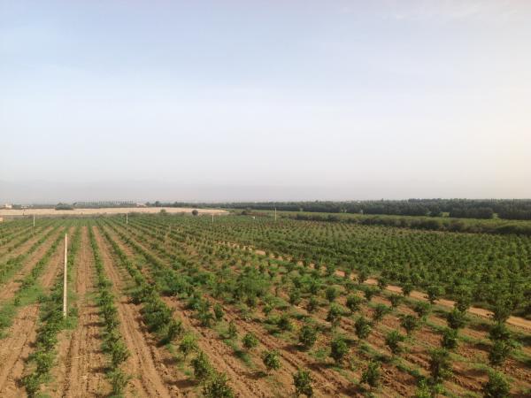 Terrain agricole a vendre tiflet maroc for Container sur terrain agricole